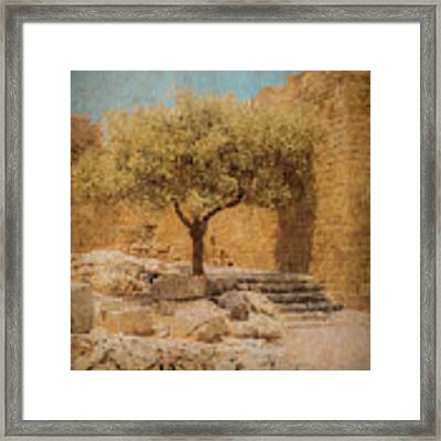 Rhodes, Greece - Young Olive Framed Print by Mark Forte