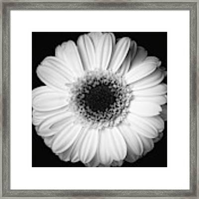 Black And White Flower Framed Print by Mirko Chessari