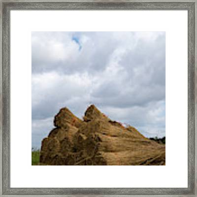 Bound Reeds  Framed Print by Anjo Ten Kate