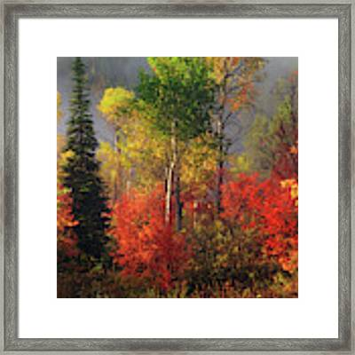 Color And Light Framed Print by Leland D Howard