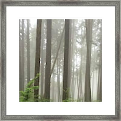 Foggy Forest Framed Print by Karen Zuk Rosenblatt