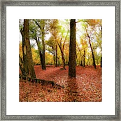 Forest Glow Framed Print by Leland D Howard