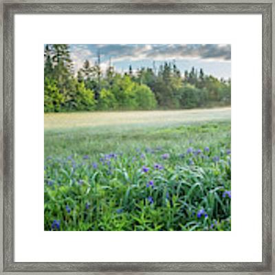 Iris Meadow 2 Framed Print by Susan Cole Kelly