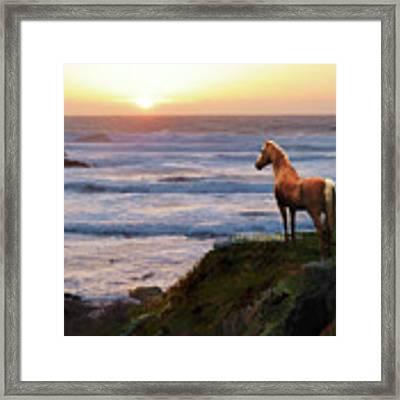 A Palomino Sunset Framed Print by Melinda Hughes-Berland