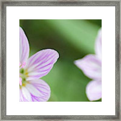 Allerton Beauties Framed Print by Dylan Punke
