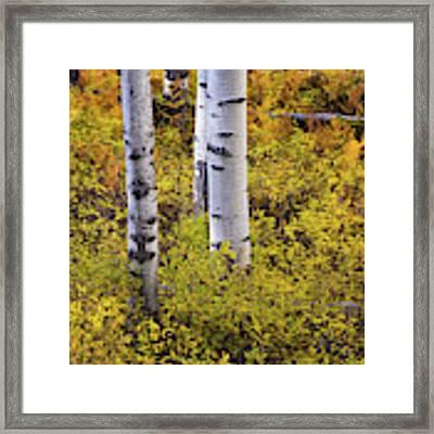 Autumn Contrasts Framed Print by John De Bord