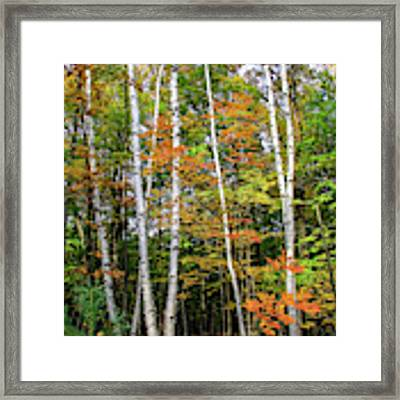 Autumn Grove, Vertical Framed Print by Dawn Richards