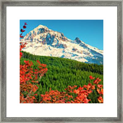 Autumn In Lolo Pass Mt. Hood National Forest Framed Print by Dee Browning