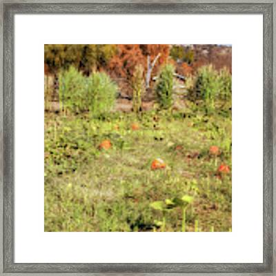 Autumn In The Pumpkin Patch Framed Print by Alison Frank