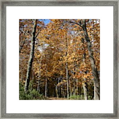 Autumn Pathway Framed Print by Dylan Punke