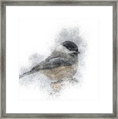 Black-capped Chickadee Perch Framed Print by Patti Deters
