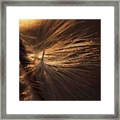 Blowing Framed Print by Michelle Wermuth