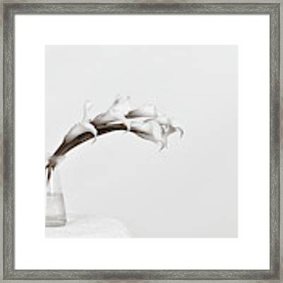 Calla Love Framed Print by Michelle Wermuth