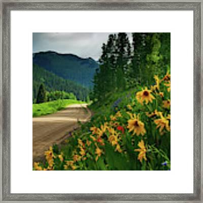 Colorado Wildflowers Framed Print by John De Bord