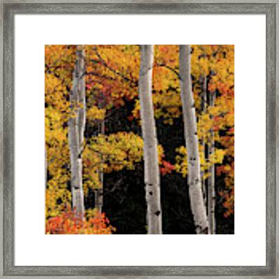 Colorful Autumn Contrast Framed Print by Leland D Howard