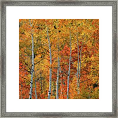 Colorful Glow Of Autumn Framed Print by Leland D Howard