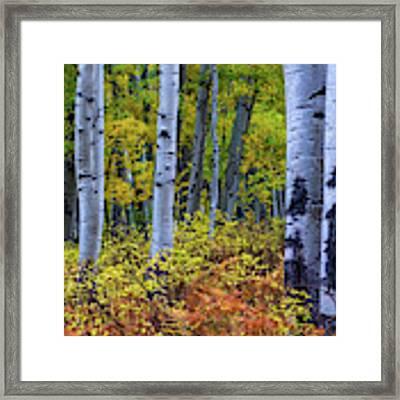 Colors Of October Framed Print by John De Bord