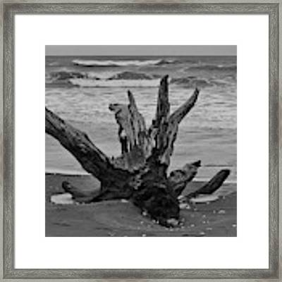 Contrasting Textures Framed Print by Jeni Gray