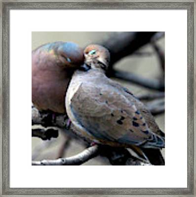Cooing Mourning Doves 2 Framed Print by Patricia Youngquist
