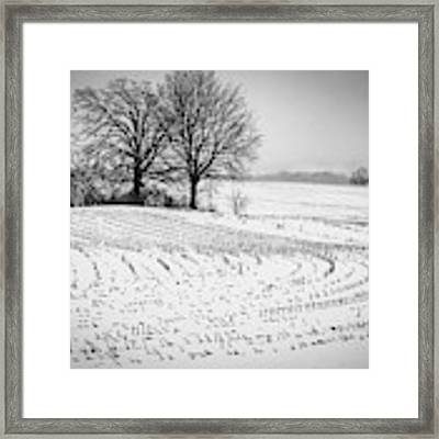 Corn Snow Framed Print by Kendall McKernon