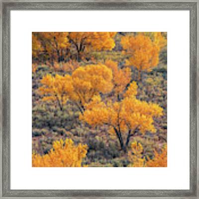 Cottonwoods In Autumn Framed Print by Dustin LeFevre