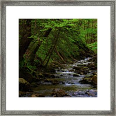 Creek Flowing Through Shady Forest Framed Print by Dee Browning