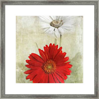 Dancing In The Moonlight Framed Print by Judy Hall-Folde