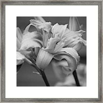 Day Lily Yellow Filter Framed Print by Jeni Gray