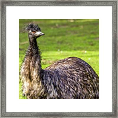 Emu Do Framed Print by Kate Brown