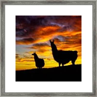 Epic Llama Sunrise Framed Print by Bryan Smith
