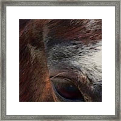 Eye Of A Horse  Framed Print by Shelli Fitzpatrick