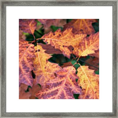 Fall Flames Framed Print by Whitney Goodey