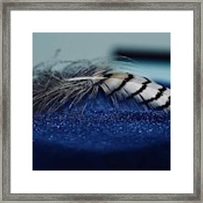 Feather Framed Print by Ann E Robson