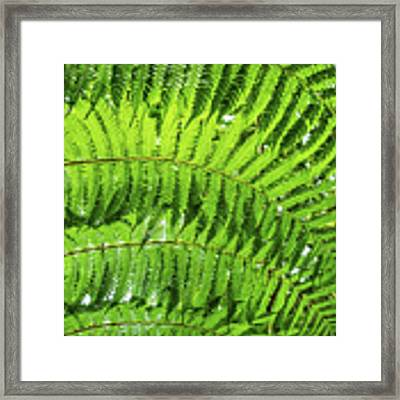Fern Framed Print by Nick Bywater