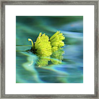 Floating Daisies 1 Framed Print by Dawn Richards