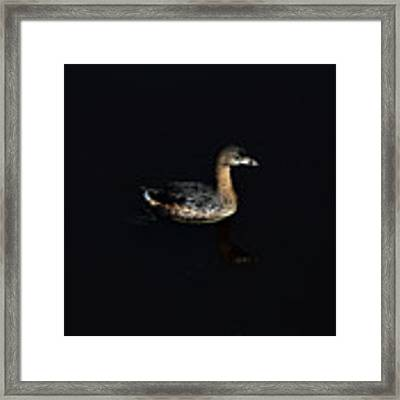 Floating On The Water Framed Print by Dan Friend