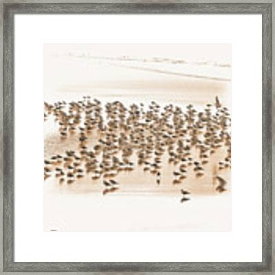 Flock Of Seagulls On Sandy Beach Framed Print by Dee Browning