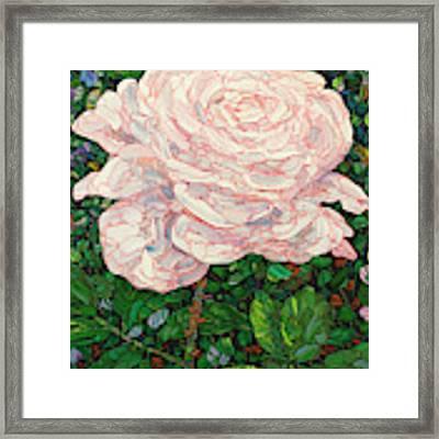 Floral Interpretation - White Rose Framed Print by James W Johnson
