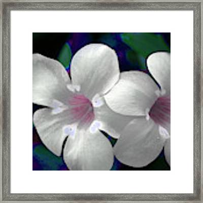 Floral Photo A030119 Framed Print by Mas Art Studio