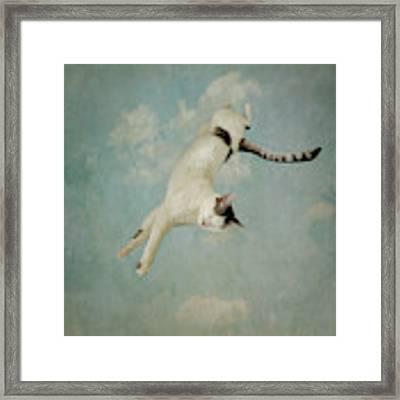 Flying Cat Framed Print by Sally Banfill