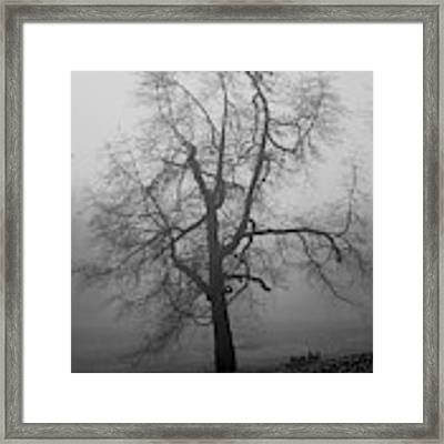 Foggy Tree In Black And White Framed Print by William Selander