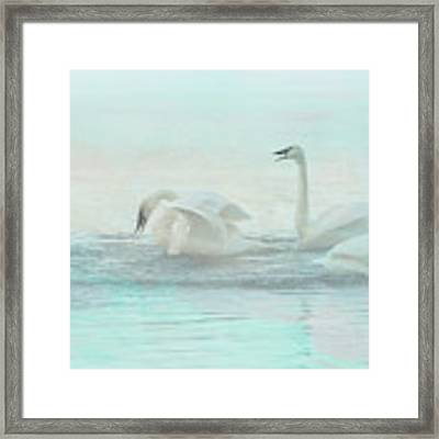 Four Swans Watercolor Group Play Framed Print by Patti Deters