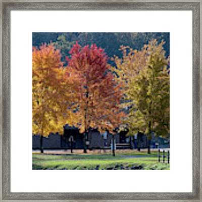 Four Tree Lineup Framed Print by Dan Friend