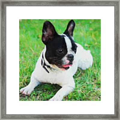 French Bulldog Puppy In The Grass - Painted Framed Print by Ericamaxine Price