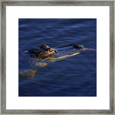 Gator And Snake Framed Print by Tom Claud