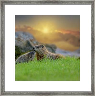 Groundhog Morning Framed Print by Bob Orsillo