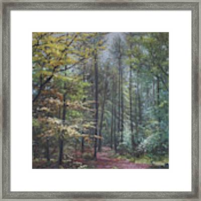 Group Of Trees In The New Forest. Framed Print by Martin Davey