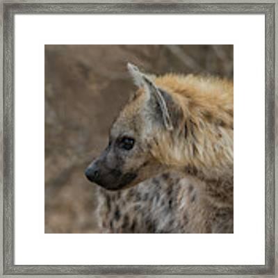 H1 Framed Print by Joshua Able's Wildlife
