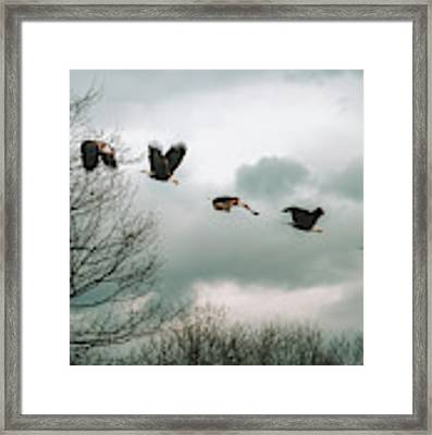 Half Second Of Flight Framed Print by Bob Orsillo