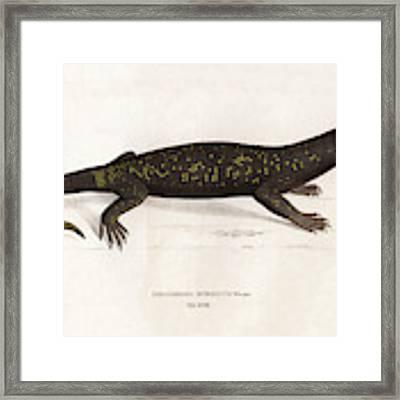 Heloderma Horridum, Beaded Lizard Framed Print by Unknown